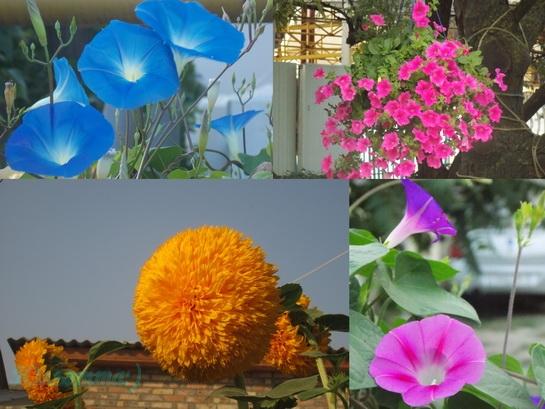 цветы Крыма